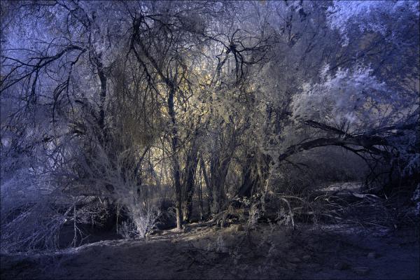 Grove of trees...