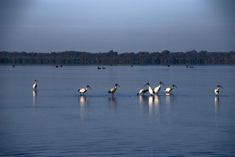 Lake Weyba 2, Sunshine Coast, QLD, Australia