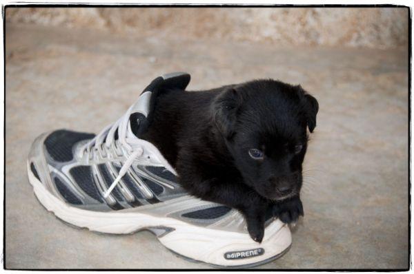 Our new puppy; Taj