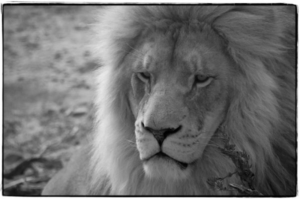 One of many great shots taken from our Safar in SA