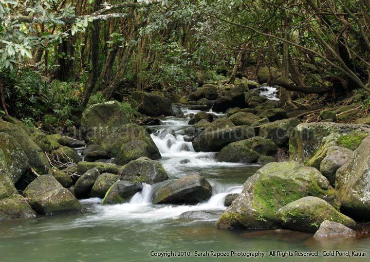 Cold Pond , Kaua`i - Hawai`i