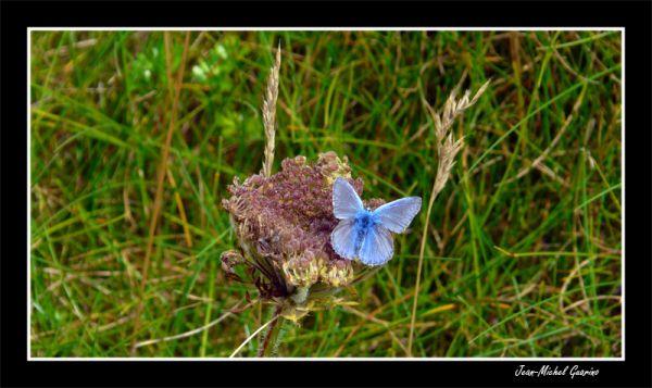 papillon butterfly