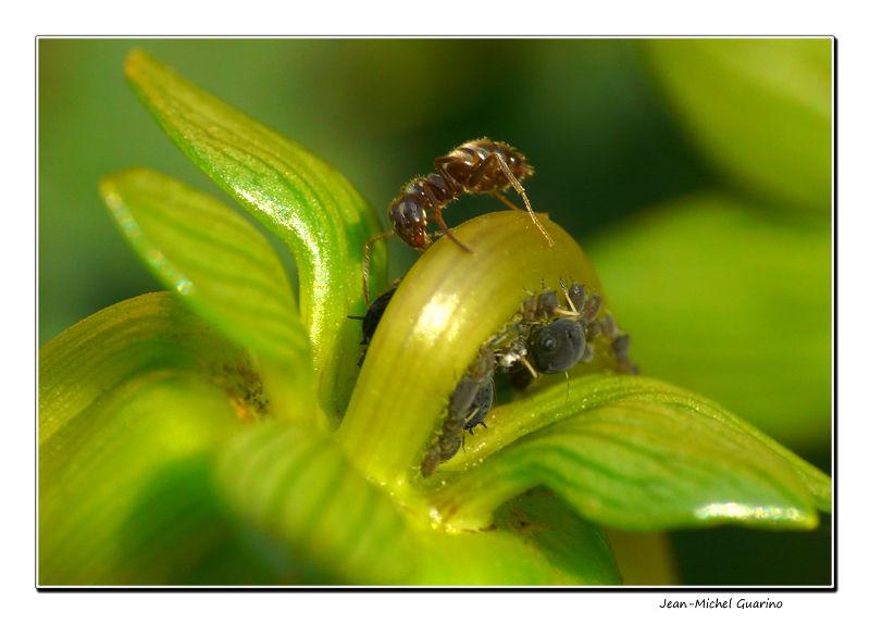Macro fourmis