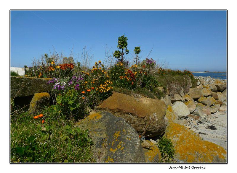 Penvenan fleurs mer cotes d'armor Bretagne