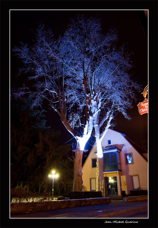 Colmar Alsace France arbre photo nuit