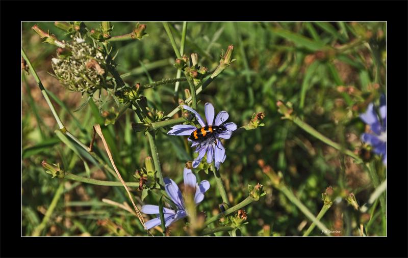 Vaison Provence insecte