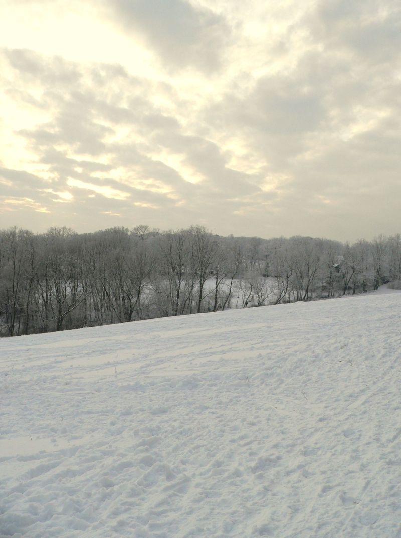 wienerwald in winter II