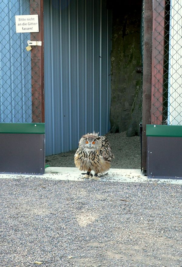 time for one of the owl´s walkies