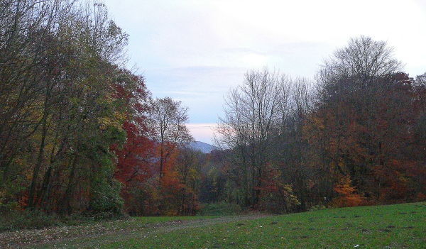 autumn wienerwald I