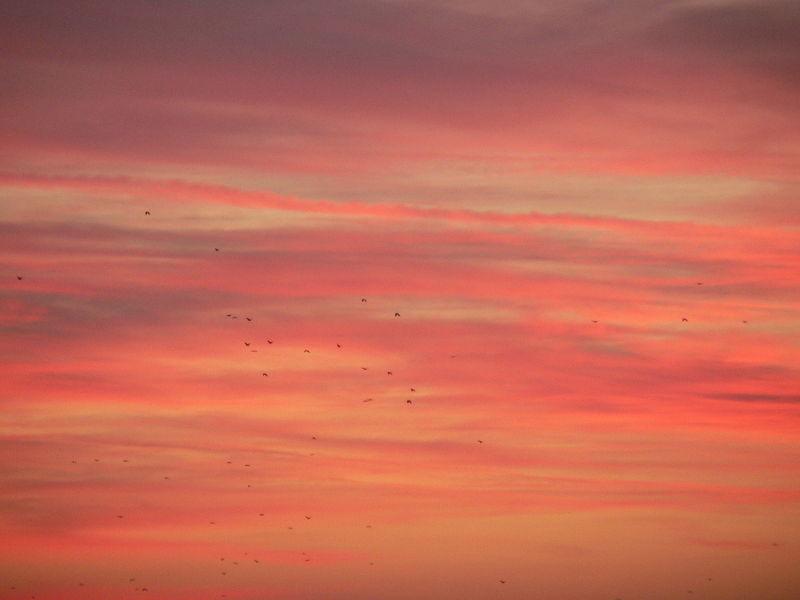 birds in the evening sky above vienna