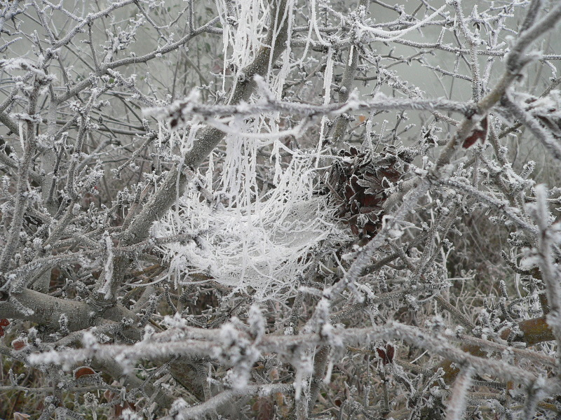 spiders web covered by white frost