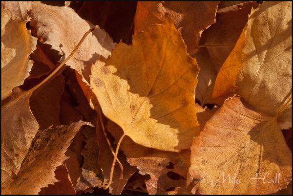 fall color, leaves, macro