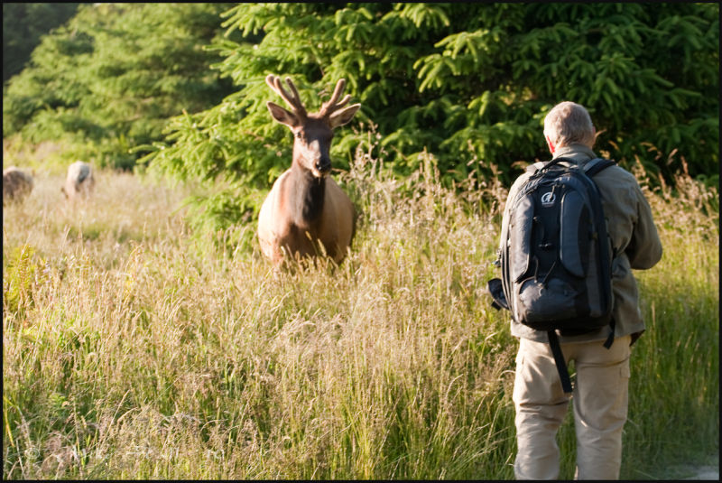 Photographer showdown with Elk