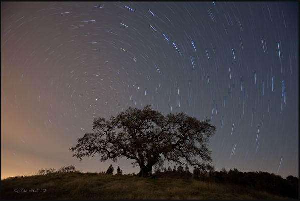Oak under the night sky