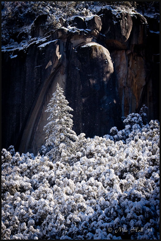 Fresh snow coats the tree above the Merced River