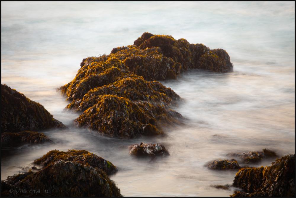 Warm light on seaweed covered rocks