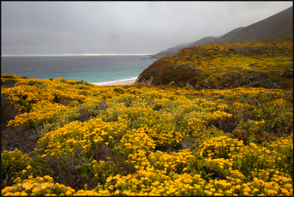 Summer fog along the Big Sur Coast