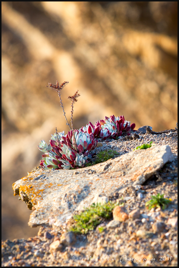Point Lobos Flora