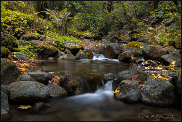 Fall Creek in Henry Cowell State Park
