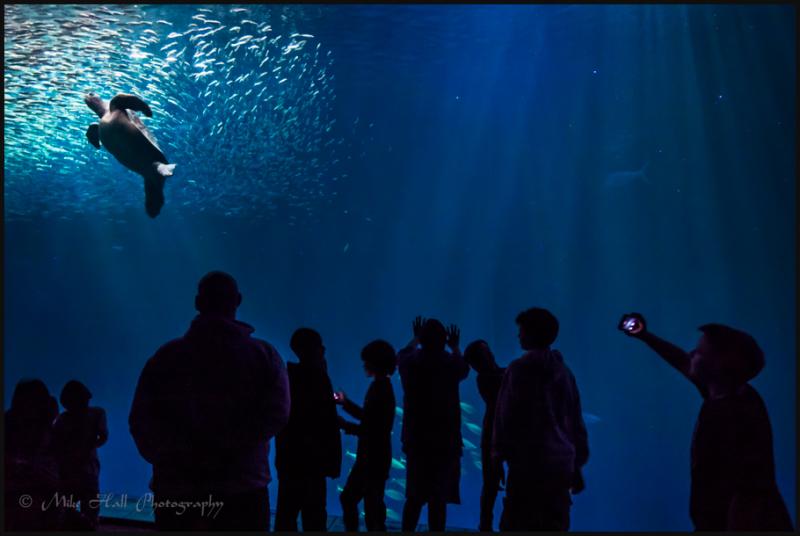 Monterey Bay Aquarium Open Sea Exhibit