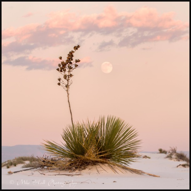 Moonrise and Yucca at White Sands Nat Monument