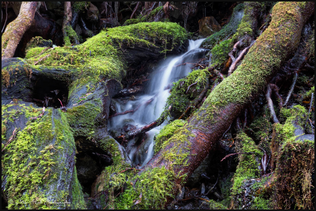 Water falling over Redwood Tree roots