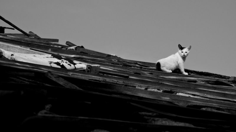 Stray Kitten on The Roof of an Abandoned House