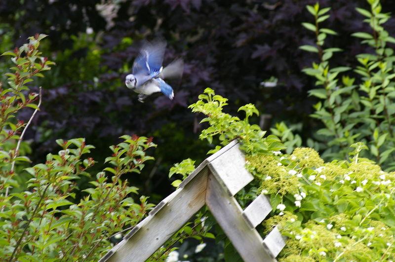 In my mother's garden ...