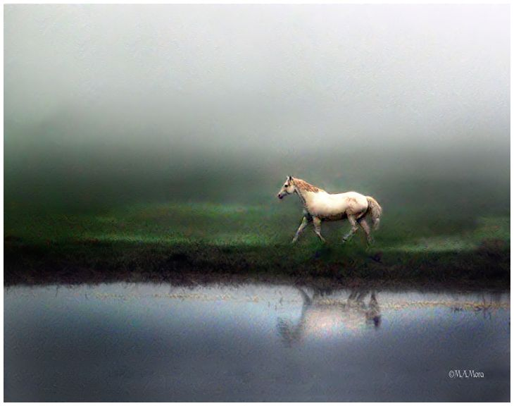 White Horse on a Foggy Morning