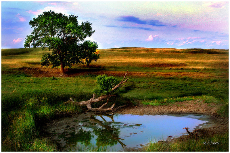 Watering hole in the sandhills