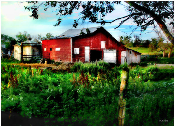 an old red shed