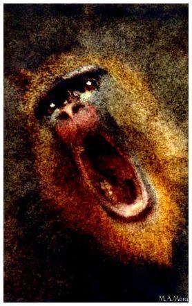 Angry Mandrill