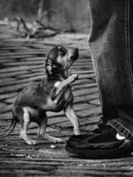 Wee Pup