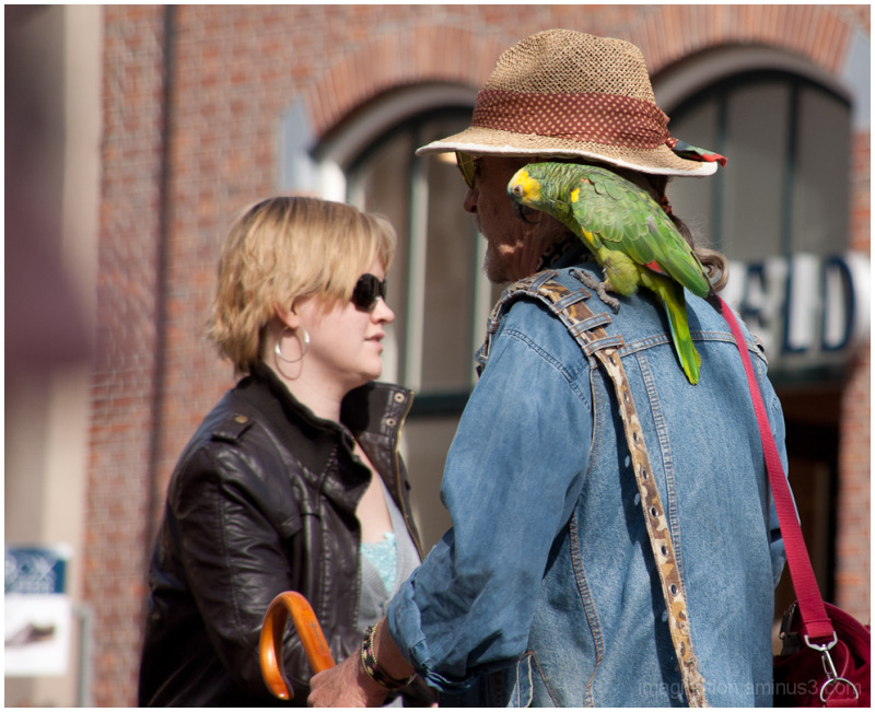 Street, Parrot, Man