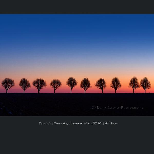Tree lined farm lane at dawn