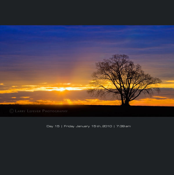 Solitary tree at sunrise.