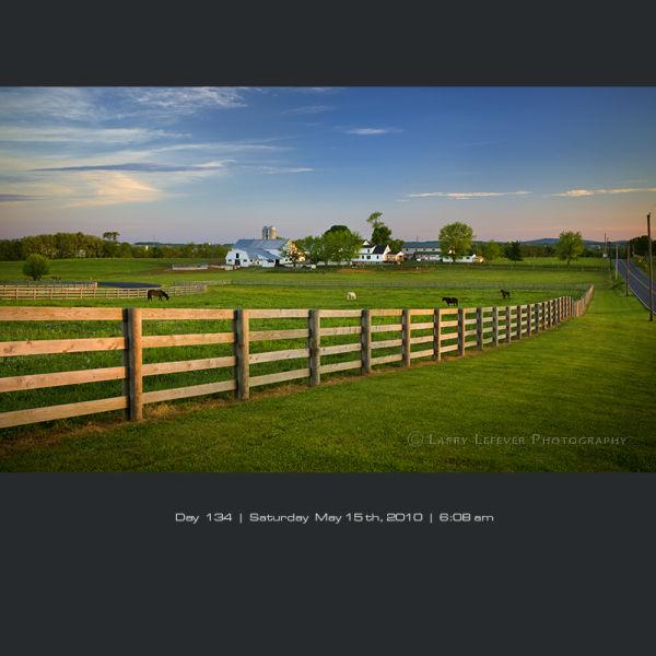 Horses on pasture.