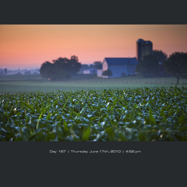 Amish farn and cornfield at dawn