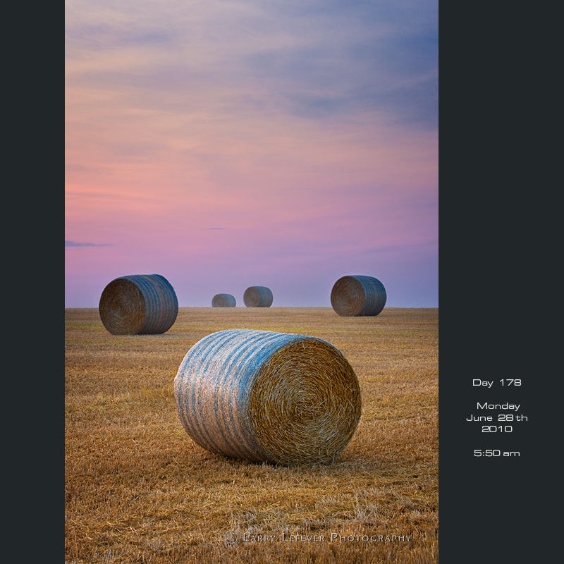 Round staw bales at dawn