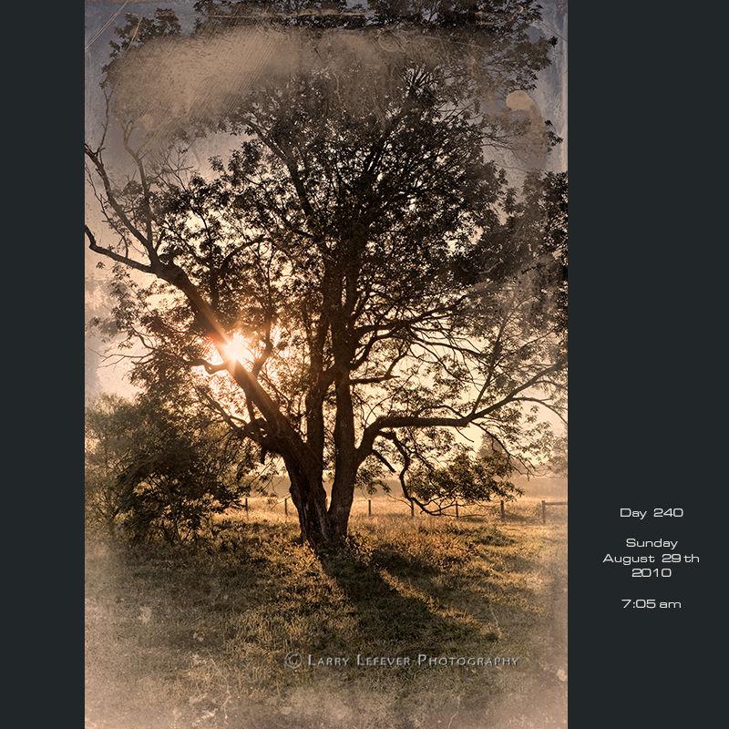 Old tree in sun