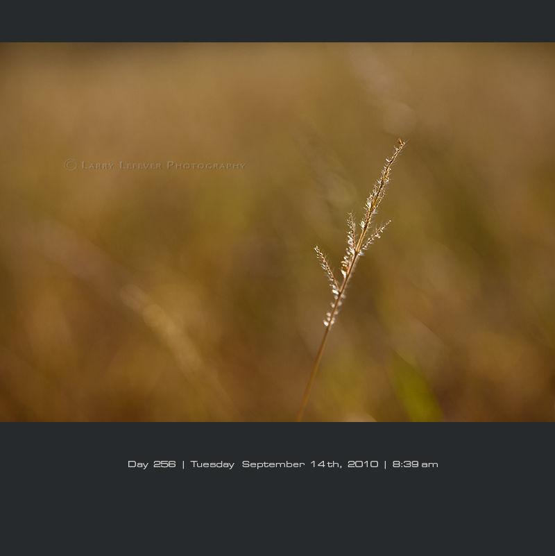 Closeup of grass
