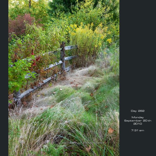 Rail fence.