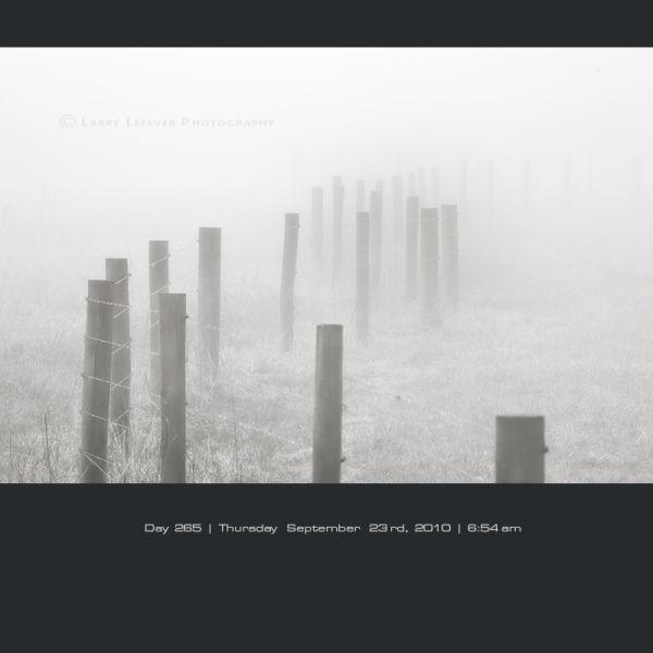 Fence row in fog