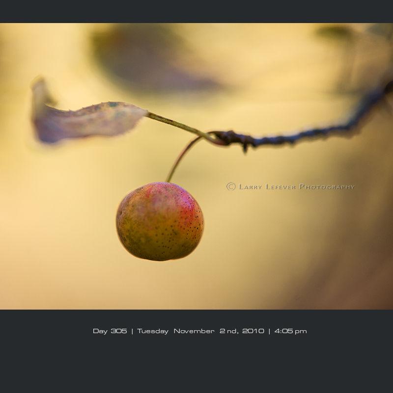 Crab Apple