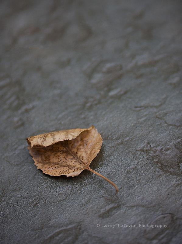 Leaf on bluestone patio