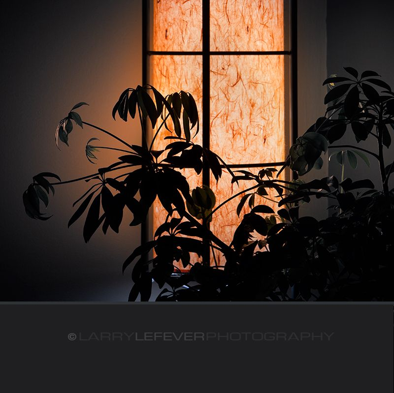 Plant and Japanese lamp