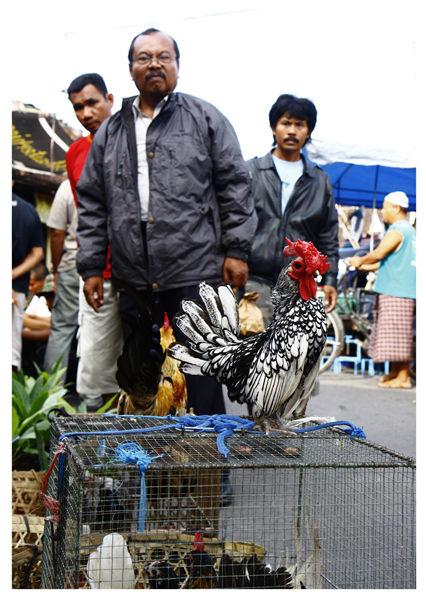Men looking at their power market yogyakarta