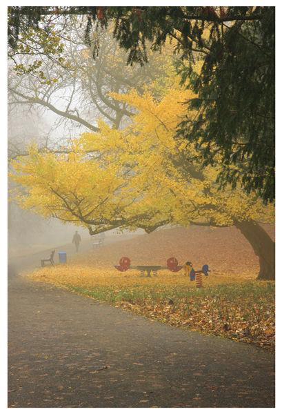 Colour Park Tree Maastricht Nederland