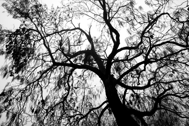 Black&white Tree Park Nederland Maastricht