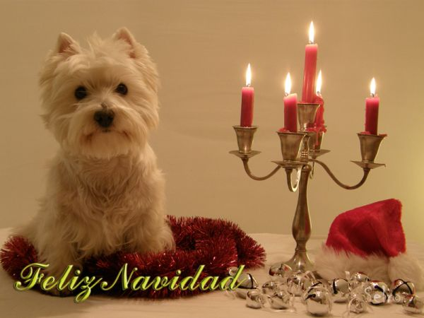 Edelweiss wishes you Merry Christmas